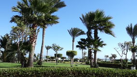 Пальма пошатывая на ветре в пляже акции видеоматериалы