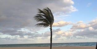Пальма пошатывая на пляже Стоковые Фото