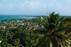 Пальма против голубого неба и моря Стоковое Изображение RF