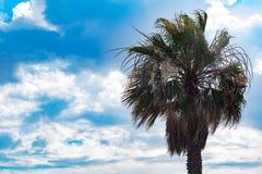 Пальма против солнечного голубого неба с облаками Стоковая Фотография RF