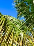 Пальма - Пуэрто-Рико Стоковая Фотография RF