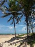 пальма пляжа Стоковые Изображения RF