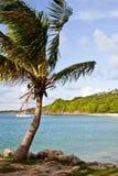 Жизнь острова Стоковая Фотография RF