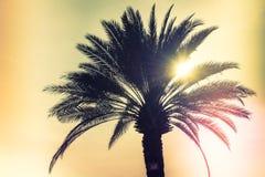 Пальма силуэта Стоковое Изображение