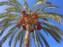 Пальма смотря вверх стоковые изображения rf