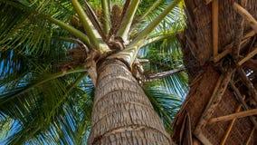 Пальма с строением кабины из тростника Стоковое Изображение