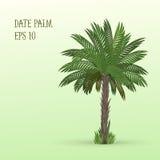 пальма Тунис даты Африки Стоковое Изображение RF