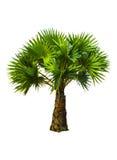Пальма Стоковые Изображения RF