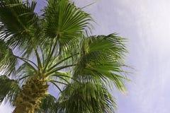 Пальмы дальше против красивого голубого неба Стоковое Изображение RF