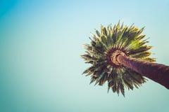 Пальмы Беверли-Хиллз винтажные Стоковая Фотография