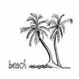 Пальмы вручают вычерченный эскиз Стоковые Фотографии RF
