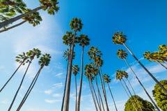 Пальмы в заливе полета Стоковое фото RF