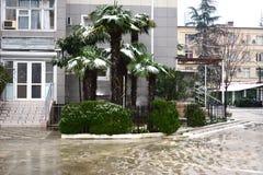 Пальмы в зиме Стоковое Фото