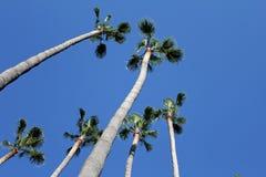 Пальмы в Испании Стоковые Фото