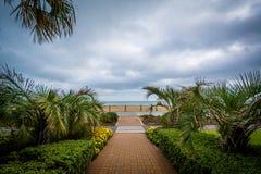 Пальмы вдоль дорожки, в Virginia Beach, Вирджиния Стоковые Фотографии RF