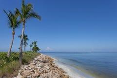 Пальмы вдоль Captiva, Флориды Стоковые Изображения