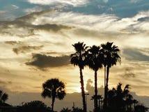Пальмы в солнечном свете стоковое изображение rf