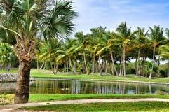 Пальмы в тропическом рае Стоковое Изображение RF