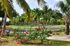 Пальмы в тропическом рае Стоковое фото RF