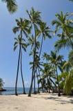 Пальмы Гаваи Стоковое фото RF