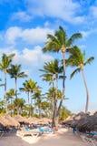 Пальмы, зонтики и sunbeds на песчаном пляже Стоковые Изображения