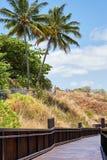 Пальмы и деревянный мост Стоковые Фото