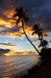 Пальмы и заход солнца, Кауаи, Гаваи Стоковые Изображения RF