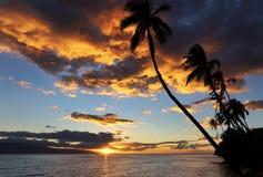 Пальмы и заход солнца, Кауаи, Гаваи Стоковые Изображения
