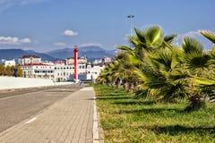 Пальмы и маяк Стоковые Фото