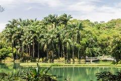 Пальмы и озеро Стоковые Изображения