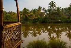 Пальмы и пруд goa Индия стоковое изображение rf