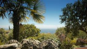 Пальмы и Средиземное море на Монако, Cote d'Azur Франции акции видеоматериалы