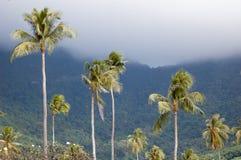 Пальмы и туман Moorea Стоковые Фотографии RF