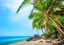 пальмы кокоса пляжа тропические Стоковое Фото