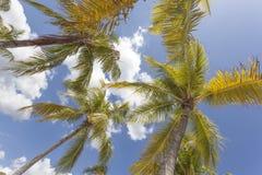 Пальмы кокоса Стоковое фото RF