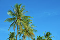 Пальмы на голубом небе Стоковые Фотографии RF