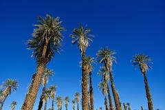 Пальмы на заводи печи Стоковое фото RF