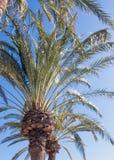Пальмы на красивой предпосылке Стоковое Изображение