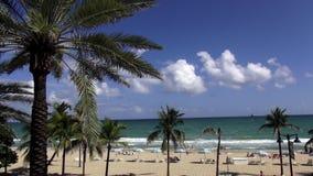 Пальмы на красивом пляже Ft Городские пейзажи Lauderdale США сток-видео