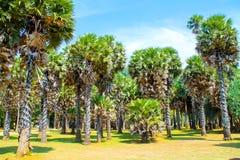 Пальмы на национальном парке, Koh Lanta, Таиланде Стоковые Изображения