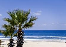 Пальмы на предпосылке белого песка, море с волнами и небе Стоковые Изображения RF