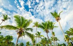 Пальмы на предпосылке неба Стоковые Фото