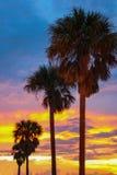 Пальмы на пляже на ноче Стоковая Фотография