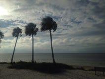 Пальмы на пляже против пасмурного ландшафта Стоковые Изображения