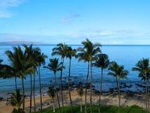 Пальмы на пляже Стоковые Изображения RF