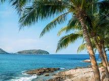 Пальмы на пляже Стоковое Фото