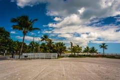 Пальмы на пляже Higgs, Key West, Флориде стоковое фото rf