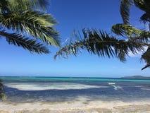 Пальмы над смотреть голубое перемещение моря океана Стоковое фото RF