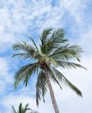 Пальмы на яркой Стоковые Фотографии RF