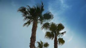 Пальмы на Cote d'Azur Франции сток-видео